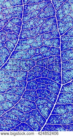Leaf Of Fruit Tree Close-up. Vivid Blue Inverted Mosaic Pattern Of A Net Of Veins And Plant Cells. C
