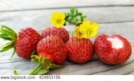 Garden Strawberry Close-up. Red Berries Lie On A Wooden Background Among Yellow Buttercups.