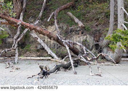 Downed Tree Sitting Along Shoreline In Washington State