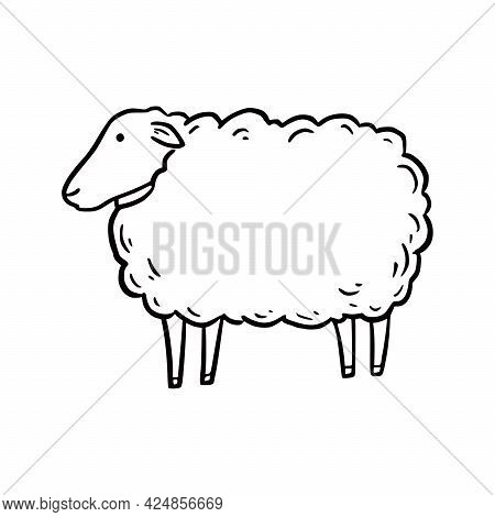 Hand Drawn Sheep. Doodle Sketch Style. Drawing Line Simple Sheep Icon. Isolated Vector Illustration.