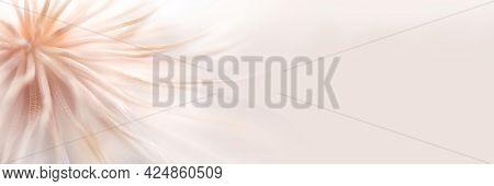Pastel Banner For Text And Design. Defocused Pastel Dandelion Seeds Background. Delicate Pastel Back