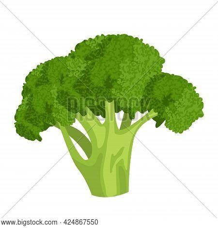 Cartoon Vector Illustration Isolated Object Fresh Food Vegetable Cauliflower