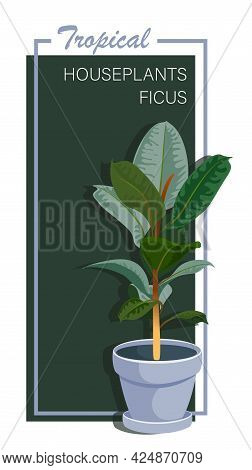 Ficus Tree. Vector Beautiful Houseplant In Ceramic Pot Isolated On Dark Background. Floral Poster.