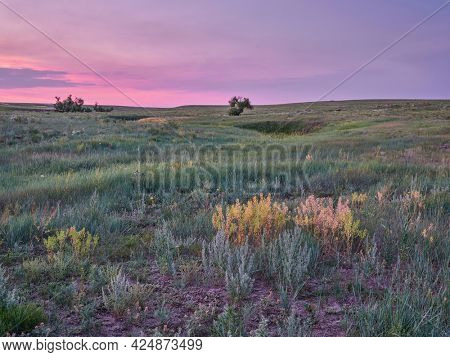 sunrise over green prairie with wildflowers - Pawnee National Grassland in Colorado, late spring or early summer scenery