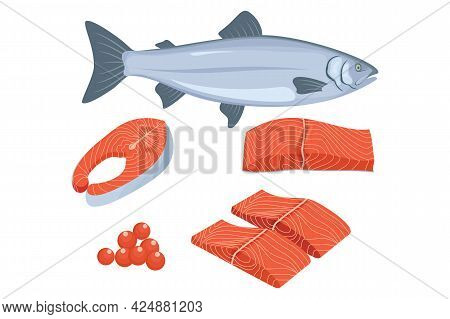 Salmon Vector Ilustration Isolated On White Background From Seafood Collection. Salmon Cutlet Vector