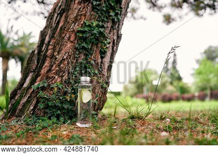 Bottle Of Water With Lemon Stands By A Large Spruce In The Park