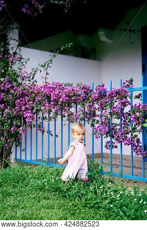 Little Girl Stands On Green Grass Near A Metal Fence Of A House Next To A Purple Bougainvillea Bush