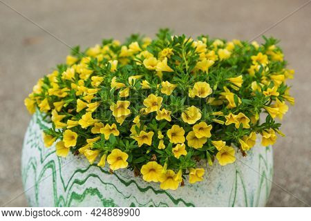 A Low Angle View Of A Flower Pot Full Of Yellow Million Bells Flowers