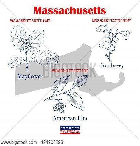 Massachusetts. Set Of Usa Official State Symbols. Vector Hand Drawn Illustration