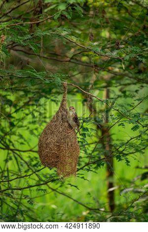 Bird Sitting On The Nest, Birds Photography , Birds Lover