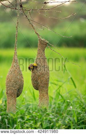 Bird Sitting On The Nest , Birds Photography , Birds Lover