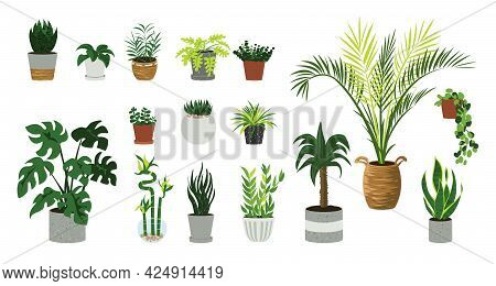 Houseplants. Cartoon Home And Office Cozy Plants In Flowerpots. Decorative Palm, Bamboo Or Ficus In