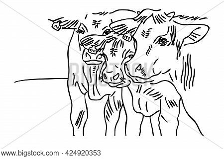 Farm Cows. Vector Design Of The Head Of Three Cows On A White Background. A Livestock Farm. Line Art