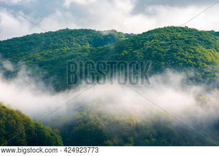 Forest In The Morning Mist. Beautiful Nature Scenery In Summer Season. Green Nature Background In Dr
