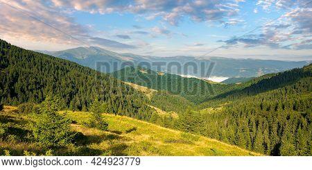 Beautiful Mountain Landscape At Sunrise. Spruce Trees On The Steep Hills. Stunning Summer Scenery Of