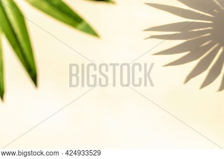 Wall Shadow Summer Background. Plant Leaf Shadows On White Wall In Abstract Tropical Sunlight Textur