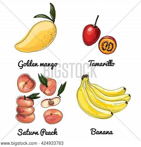 Flat Peach Vector Food Icons Of Fruits. Colored Sketch Of Food Products. Saturn Peach, Bananas, Tama
