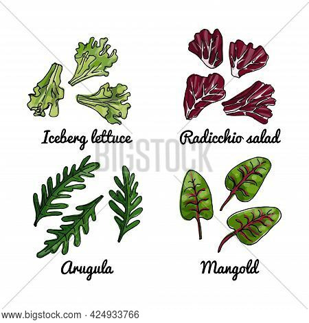 Vector Food Icons Of Vegetables. Colored Sketch Of Food Products. Iceberg Lettuce, Arugula, Radicchi