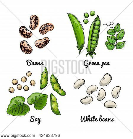 Vector Food Icons Of Vegetables. Colored Sketch Of Food Products. Baens, Green Pea, Soy, White Beans