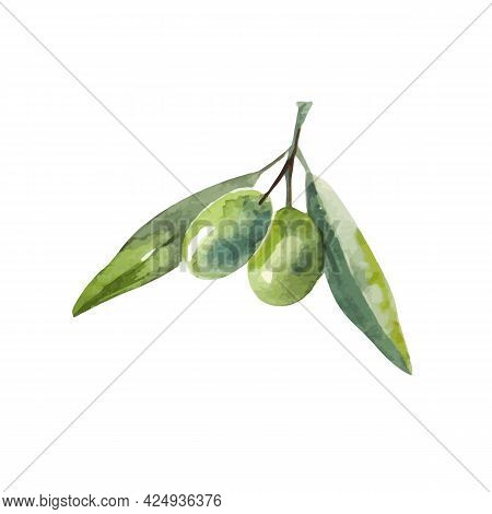Watercolor Olive Branch. Sketch Of Olive Branch On White Background
