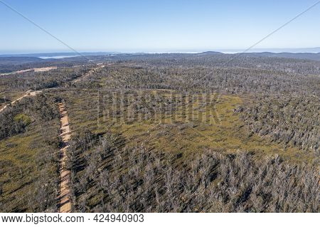 Drone Aerial Photograph Of A Dirt Road Running Through A Forest Regenerating After Bushfires In The
