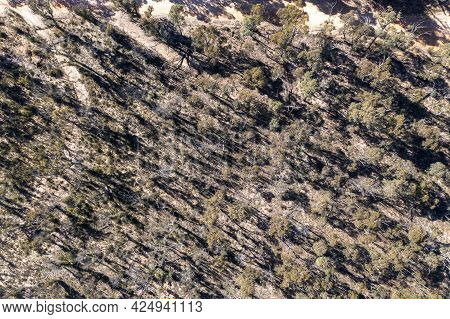 Drone Aerial Photograph Of Forest Regeneration After Bushfires In The Central Tablelands In Regional