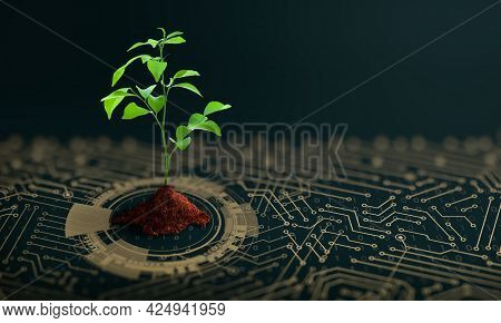 Growing Tree With Soil On The Converging Point Of Computer Circuit Board. Nature With Digital Conver