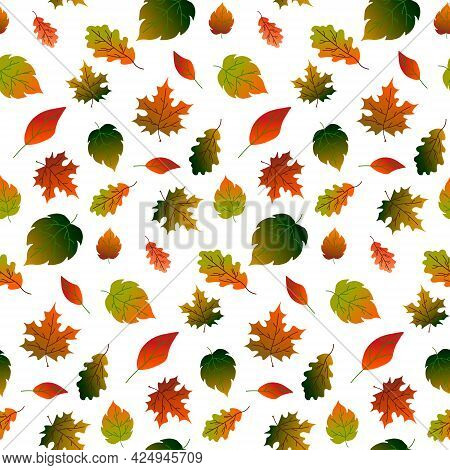 Pattern With Autumn Leaves - Oak, Maple, Birch. Vector Illustration Isolated On White Background. Fo