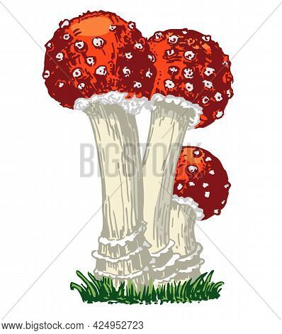 Fly Agaric, Non-edible Poisonous Forest Mushrooms Sketch. Card, Banner, Poster, Sticker With Fly Aga