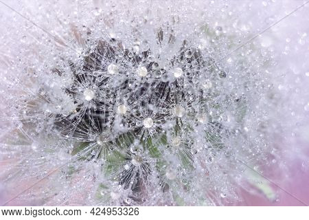 Fluffy Airy White Dandelion With Water Drops Close-up Macro. Plant Texture In Nature. Soft Focus.