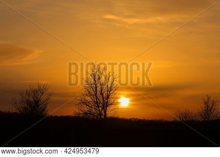 Amazing Sunset And Sunrise.tree Silhouetted Against A Setting Sun.dark Tree On Open Field Dramatic S