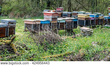 Hives Of Bees In The Apiary. Painted Wooden Beehives With Active Honey Bees. Bee Yard In Switzeland.