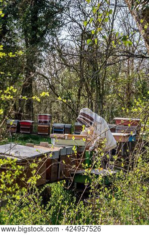 Beekeeper On Apiary. Beekeeper Is Working With Bees And Beehives On The Apiary. Hardworking.