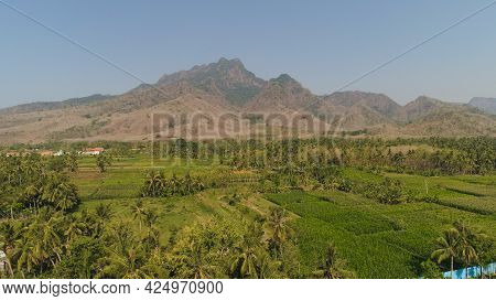 Aerial View Agricultural Farmland With Sown Green, Corn, Tobacco Field In Countryside Backdrop Mount