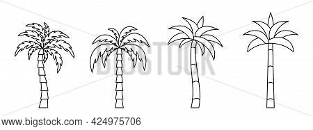 Palm Tree Icon. Set Of Linear Coconut Tree Icons. Vector Illustration. Palm Vector Icons. Black Line