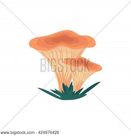 Chanterelle Mushrooms In Flat Style, Vector Illustration Of Edible Mushrooms, Isolated