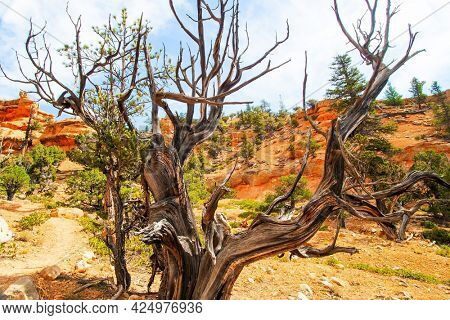 USA. The most popular trails in Red Canyon. Red Canyon Arches trail in Losee Canyon. Red-brown canyons and outliers are composed of soft sedimentary rocks.