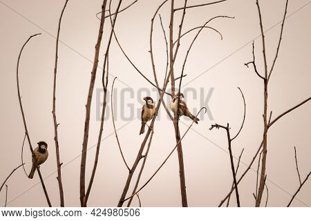 Birds Sitting On The Tree Branch , Birds Pray , Sunset View On The Background , Birds Photography
