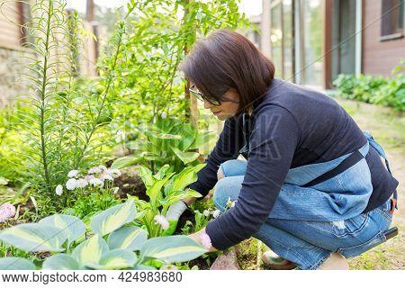 Gardening, Flower Beds, Female Gardener Working With Plants In Garden