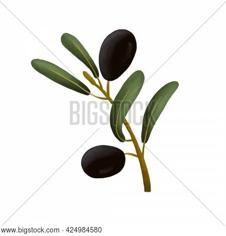 Olive Branch On A White Isolated Background. It Can Be Used For Decoration Of Textile, Paper And Oth