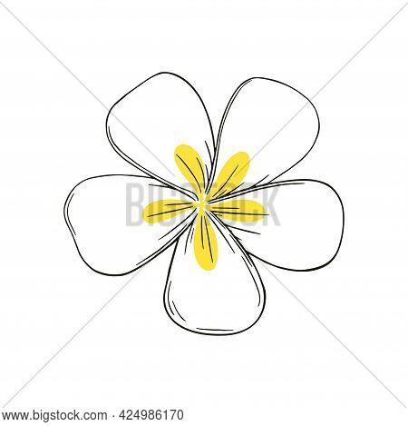 Frangipani Or Plumeria Exotic Summer Flower With Yellow Petals. Hand Drawn Frangipani Blossom Isolat