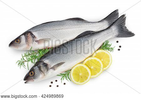 Sea Bass Fich Isolated On White Background With Clipping Path. Top View. Flat Lay
