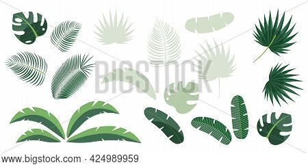 Set Of Tropical Leaves Of Palm, Fern, Monstera, Banana Isolated On White Background.