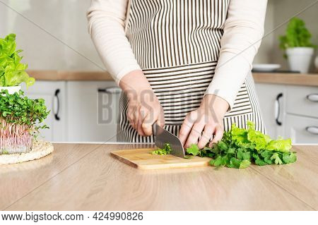 A Woman In An Apron Is Cutting Cilantro And Lettuce For Cooking. Home Garden With Lettuce, Rosemary
