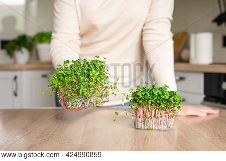 A Young Woman Standing In The Kitchen Holds A Container With Microgreens. Microgreens: Cilantro And