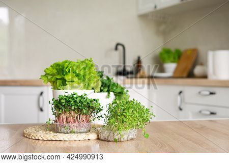 Containers Of Microgreens And Pots Of Lettuce And Cilantro On The Table In The Kitchen. Home Vegetab