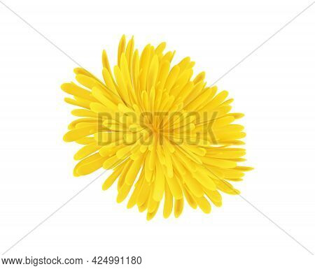 Realistic Icon With Dandelion Flower Without Stem On White Background Vector Illustration
