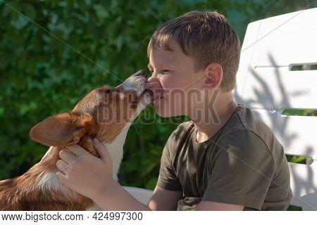 Beautiful Little Dog Corgi Cardigan In The Arms Of A Happy Boy.