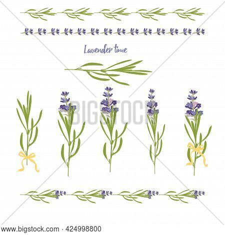 Set Violet Lavender Beautiful Floral Elements In Flat Watercolor Style Isolated On White Background