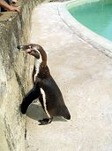 Penguin. Bird in the zoo. Wilderness. Chilling out in a holiday. Love for nature. poster